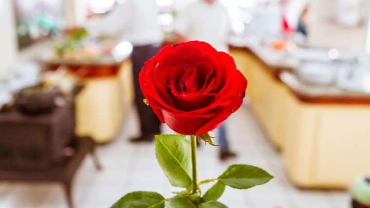 Rose flower in Apfel, vegetarian restaurant in São Paulo - Brazil