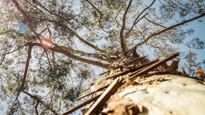 Árvore vista de baixo com delicados raios de sol. Feita pelo Fotógrafo Rodolfo Goud para o Viajo.City de São Paulo